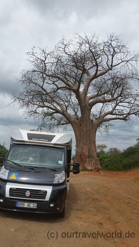 kurzer Stopp am Baobab